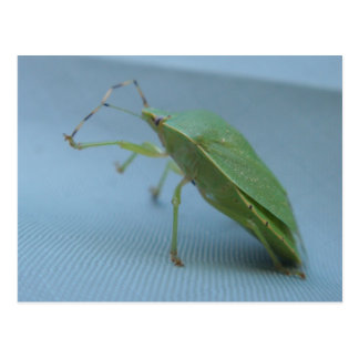 Postal verde del insecto del hedor