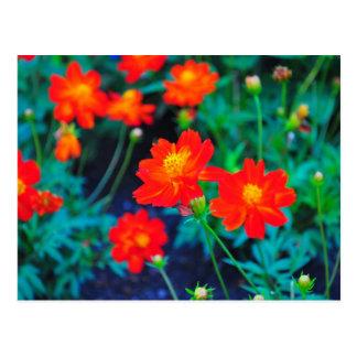 Postal vibrante de las flores