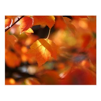 Postal vibrante de las hojas de otoño