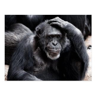 Postal vieja del chimpancé