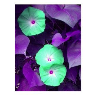 Postal violeta de la correhuela de la aguamarina N