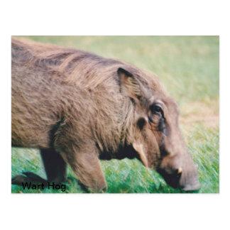 Postal Warthog