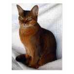 Postales abisinias rubicundas del gato