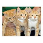 Postales anaranjadas de los gatitos del Tabby de S