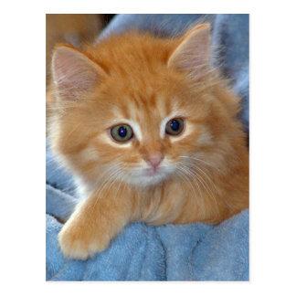 Postales anaranjadas del gatito del Tabby