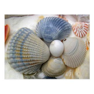 Postales azules de la fotografía del Seashell