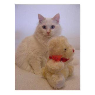 postales blancas bonitas del gatito