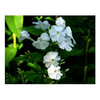Postales blancas como la nieve de las flores
