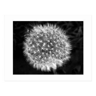 Postales blancas de la pelusa del Wildflower