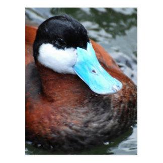 Postales cargadas en cuenta azul del pato