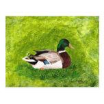 Postales de encargo del pato silvestre