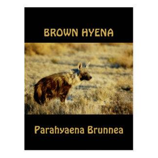 Postales de la fauna del hyena de Brown