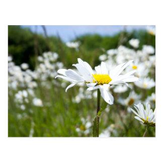 Postales de la flor de las margaritas de ojo de bu