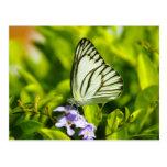Postales de la mariposa