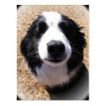 Postales de la nariz de perro