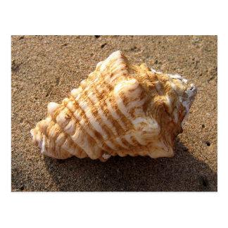 Postales de la playa de la arena del Seashell de l
