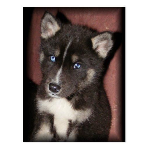 postales de los puppy_eyes
