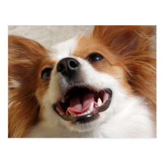 Postales de risa del perro de Papillon