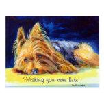 Postales de Yorkshire Terrier
