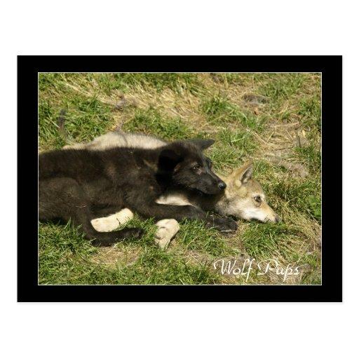 Postales del animal salvaje de los perritos de lob