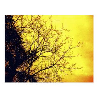 Postales del árbol y del cielo