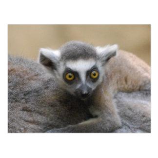 Postales del bebé del Lemur