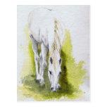 Postales del caballo blanco