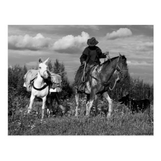 Postales del caballo y de la mula del vaquero