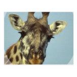 Postales del diseño de la jirafa