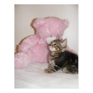postales del gatito y del oso de peluche