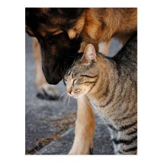 Postales del gato de los mejores amigos y del past