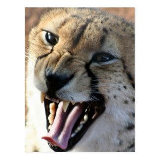 Postales del gruñido del guepardo
