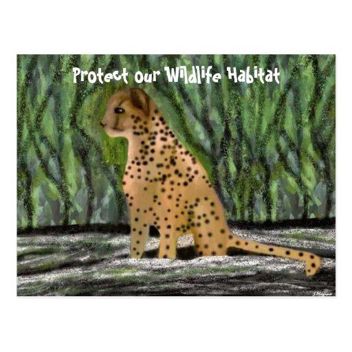 Postales del hábitat del guepardo