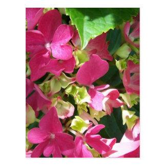 Postales del Hydrangea de las rosas fuertes