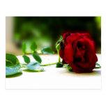 Postales del rosa rojo