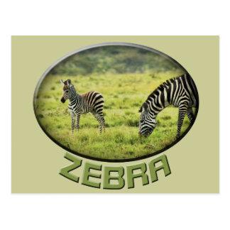 Postales del safari de la fauna de la cebra y del