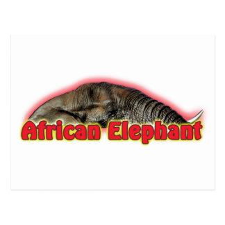 Postales del safari de la fauna del elefante afric