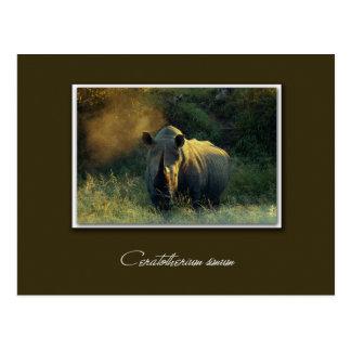Postales del safari del rinoceronte