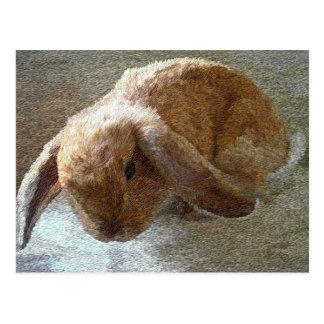 Postales espigadas del conejo de Holanda Lop