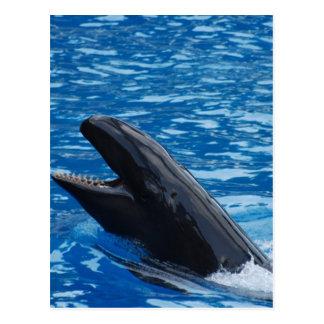Postales falsas de la orca