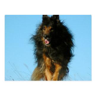 Postales finlandesas del perro de Lapphund