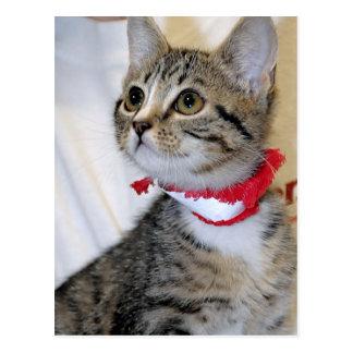 Postales (grises) grises del gatito de Shorthair d