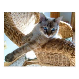 postales hermosas del gatito