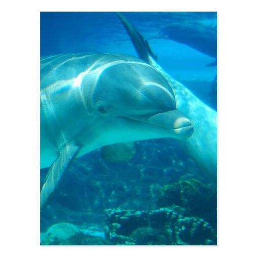 Postales juguetonas de los delfínes