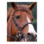 Postales lindas del caballo de la castaña