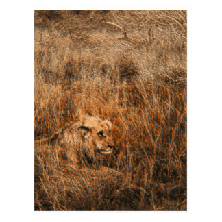 Postales masculinas del safari del animal salvaje