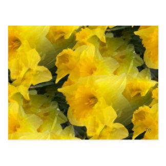 Postales opacas de las flores