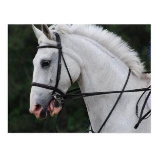 Postales recogidas del caballo blanco