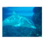 Postales subacuáticas del delfín