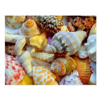 Postales tropicales de la fotografía de los Seashe